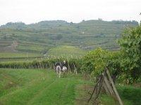 A cavallo tra le vigne