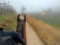 Goditi la pace della natura a cavallo