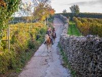 Passeggiata a cavallo in compagnia