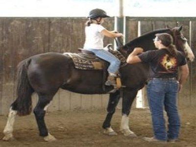 CS Horses