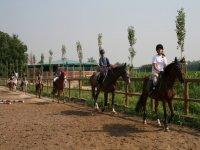 Primi passi nell equitazione