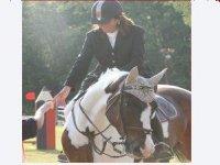 Preparazione gare e Concorsi equestri