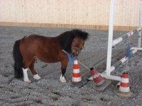 Scuola Pony nel bolognese