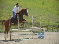 Corsi avanzati di equitazione