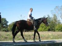 The world on horseback