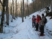 Guided snow tours