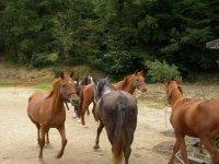 Equitazione a Stellanello