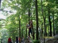 Le piattaforme sugli alberi