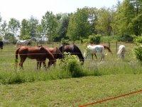 Equitazione ad Alessandria