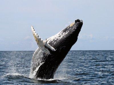 Whalewatch Imperia