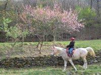 Un bambino va a cavallo!