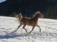 Un cavallo corre libero sulla neve