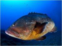 Enorme pesce