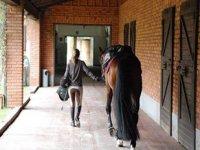 In sincronia con il cavallo