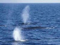 Balene viste dalla barca