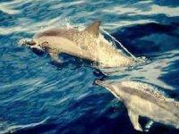 Avvistamento delfini dalla barca