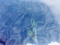 Delfini nuotando sott acqua