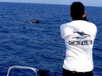 Un avvistamento dalla barca