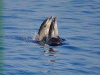 Giocando con i delfini