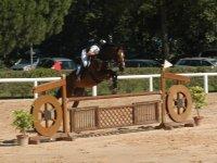 Preparazione atletica agonistica equestre