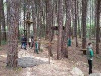 Percorsi tra gli alberi