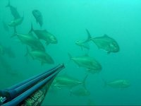 Spearfishing in Sicily