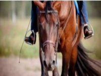 Horse riding for all