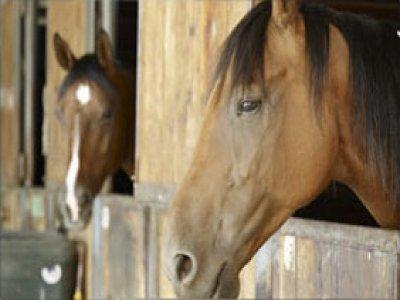 Circolo Equitazione Reggio Emilia