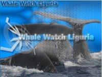 Whale Watch Liguria Escursione in Barca
