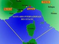 Santuario Internazionale Cetacei