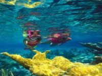 Among the Sicilian seabed