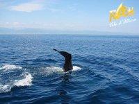 Whale watching avvistamento cetacei