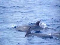 Delfini in libertá