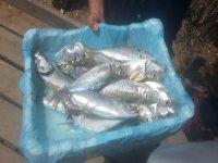 Alcuni dei pesci che abbiamo pescato