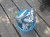 Quanti pesci!