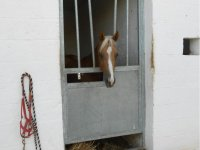 The boxes for horses