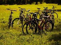 The bikes in the meadow