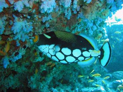 My Dive Sub