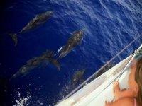 Delfini affiancando la barca