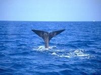 Tour di avvistamento cetacei