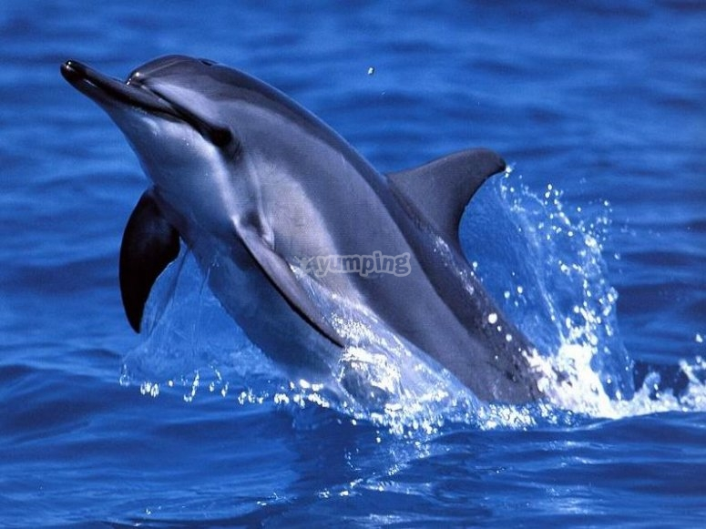 Tour di dolphin watching
