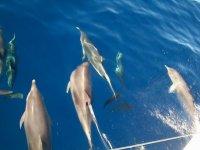 Veleggiando con i delfini