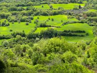natura verde
