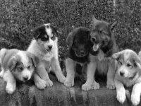 da cuccioli