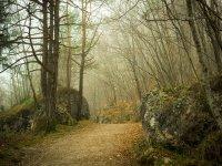 orientarsi in un bosco