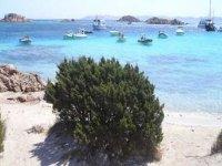 Excursion to the Maddalena Archipelago