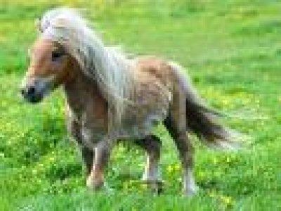 Centro Endurance Equestre