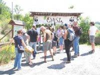Consocando the natural oases