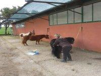 Scuola pony