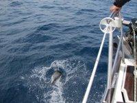 Incontro con i delfini
